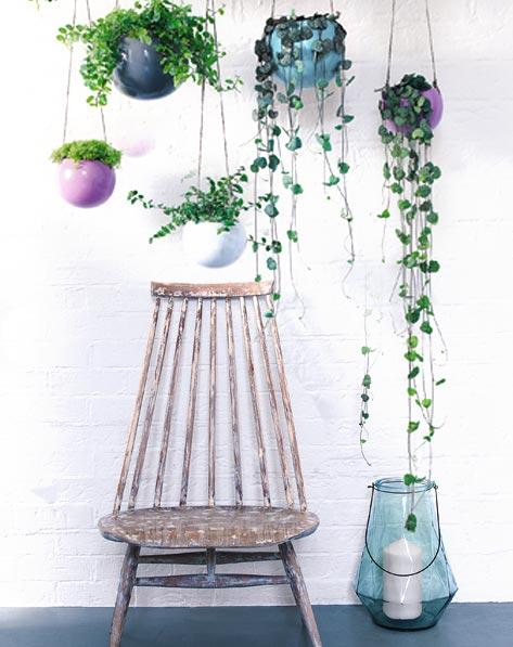 plante suspension interieur l 39 atelier des fleurs. Black Bedroom Furniture Sets. Home Design Ideas