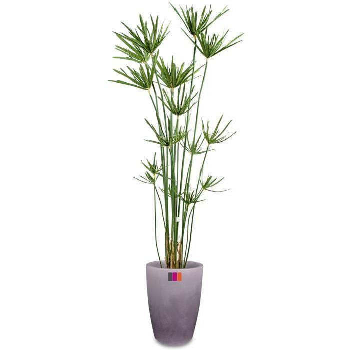 fausse plante verte exterieur l 39 atelier des fleurs. Black Bedroom Furniture Sets. Home Design Ideas