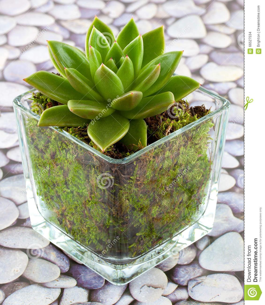 plante succulente d interieur l 39 atelier des fleurs. Black Bedroom Furniture Sets. Home Design Ideas