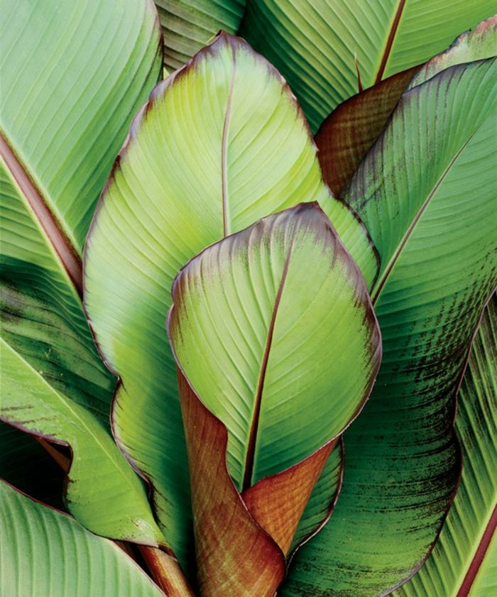 plante verte exotique d int rieur l 39 atelier des fleurs. Black Bedroom Furniture Sets. Home Design Ideas