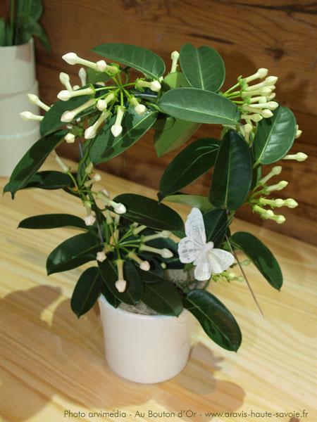 plantes vertes avec fleurs blanches l 39 atelier des fleurs. Black Bedroom Furniture Sets. Home Design Ideas