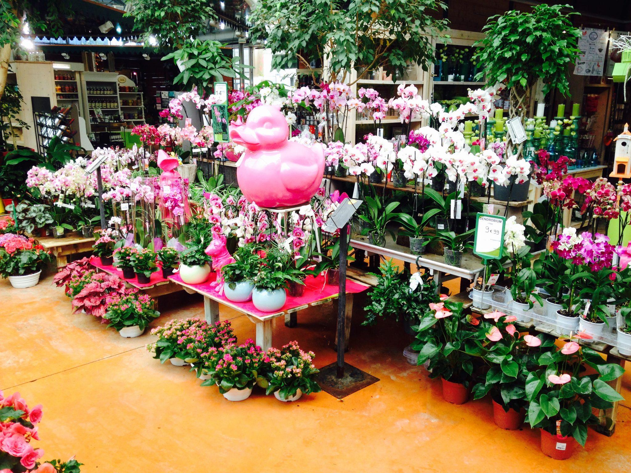 entretien des plantes vertes l 39 atelier des fleurs. Black Bedroom Furniture Sets. Home Design Ideas