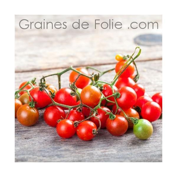 une graines tomates anciennes ici l 39 atelier des fleurs. Black Bedroom Furniture Sets. Home Design Ideas