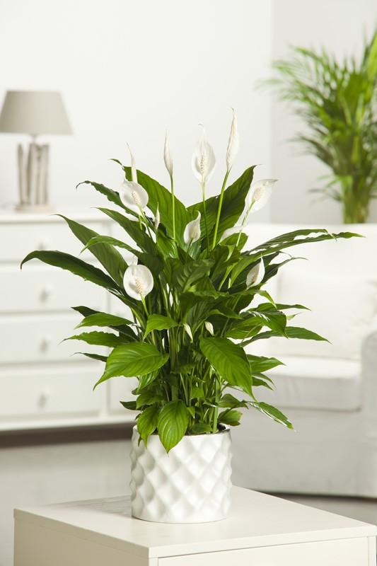 Fleur commencant par u - l'atelier des fleurs