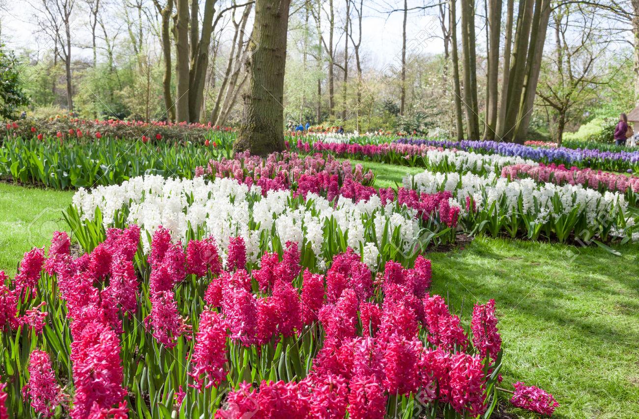 Jardin de bulbes fleurs l 39 atelier des fleurs for Le jardin keukenhof