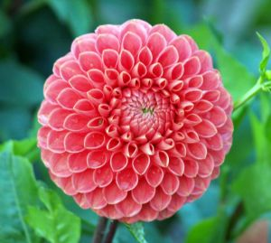 Fleur qui commence par a - l'atelier des fleurs