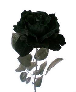 Orchid es noires l 39 atelier des fleurs - Comment garder une orchidee ...
