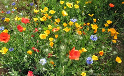 Fleurs de jardin printemps l 39 atelier des fleurs for Fleurs au jardin