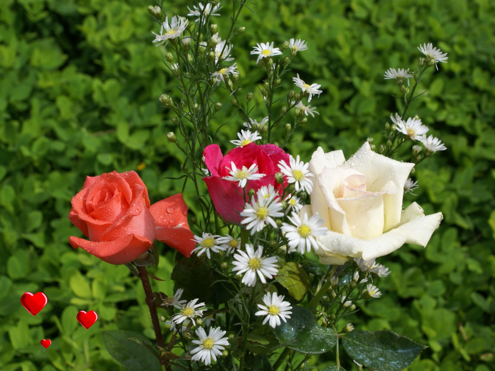 les roses d amour l 39 atelier des fleurs. Black Bedroom Furniture Sets. Home Design Ideas