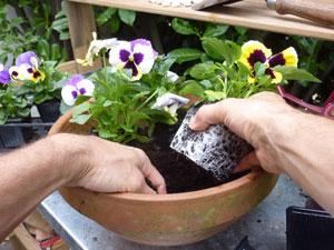 plantation printemps l 39 atelier des fleurs. Black Bedroom Furniture Sets. Home Design Ideas