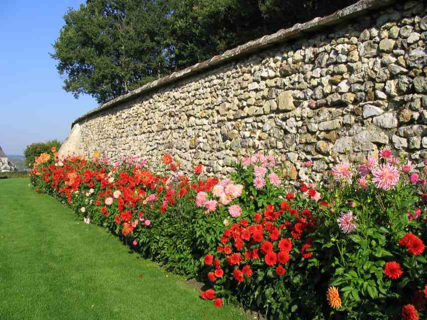 Quand planter les glaieuls et dahlias - l'atelier des fleurs