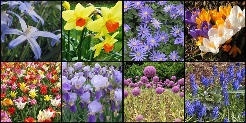 bulbe de fleur a planter en mars l 39 atelier des fleurs. Black Bedroom Furniture Sets. Home Design Ideas