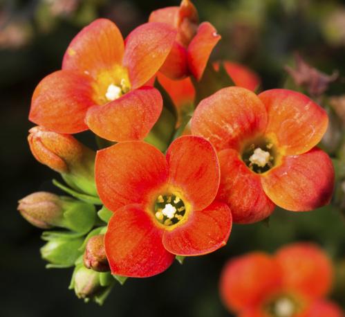 Fleurs du printemps l 39 atelier des fleurs - Quand planter les oignons rouges ...
