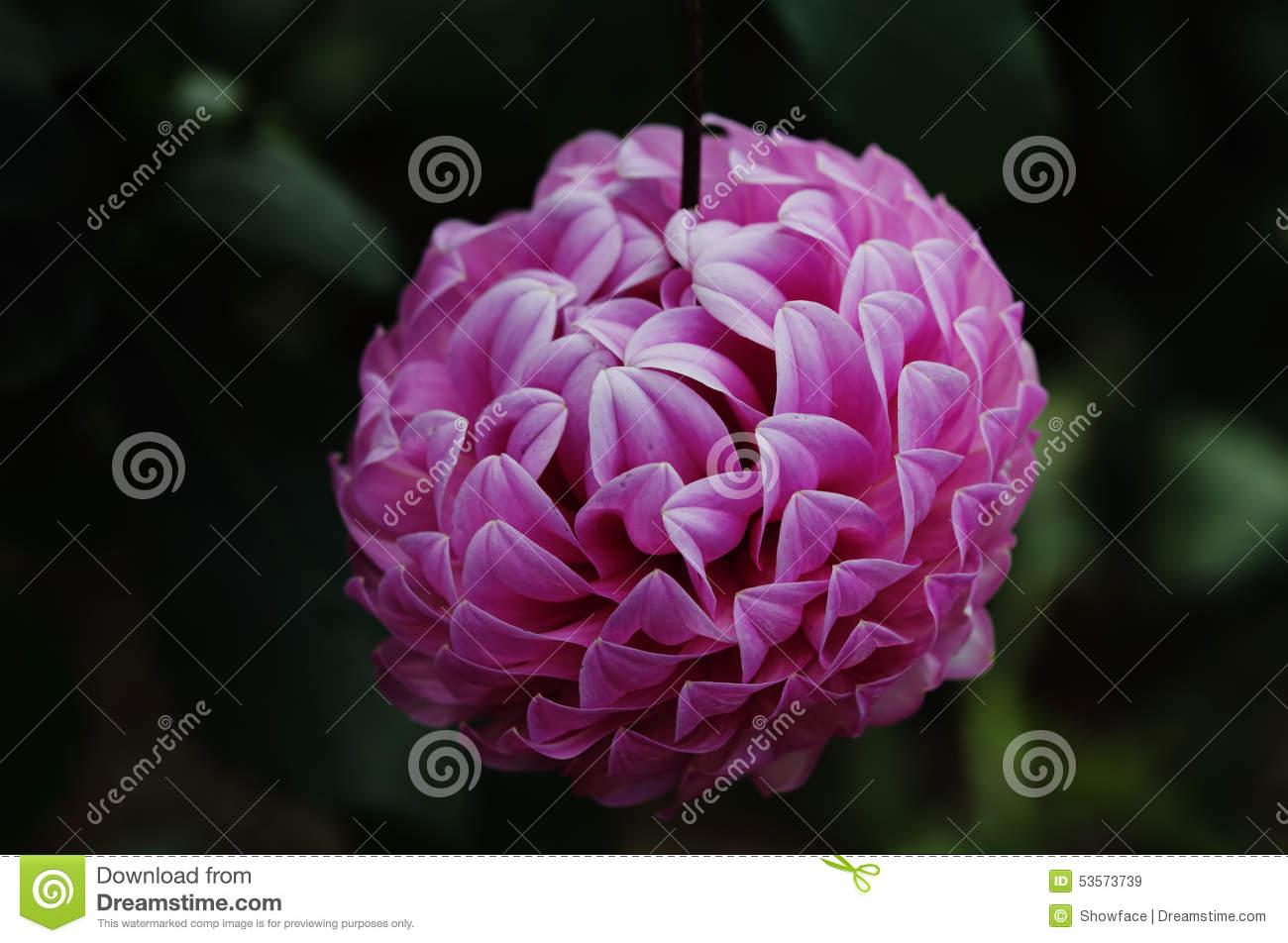 type de fleur l 39 atelier des fleurs. Black Bedroom Furniture Sets. Home Design Ideas